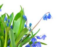 Bouquet des fleurs de source images libres de droits