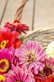 Bouquet des fleurs de zinnia dans le panier en osier Photos stock