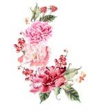 Bouquet des fleurs, des baies, des groseilles et des framboises de pivoine watercolor Images stock