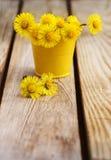 Bouquet des fleurs mère et belle-mère (le ¡ de Tussilà disparaissent) Photographie stock
