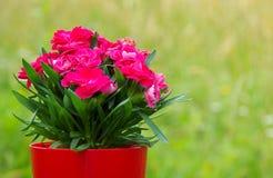Bouquet des fleurs rouges Photographie stock libre de droits