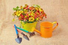 Bouquet des fleurs rouges (Helenium), des outils de jardin et de la boîte d'arrosage photo libre de droits