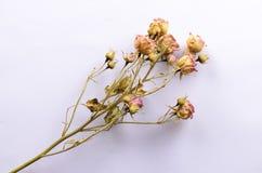 Bouquet des fleurs sèches Images stock