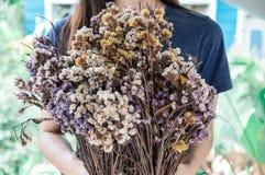 Bouquet des fleurs s?ches chez des mains de jeunes femmes photo libre de droits