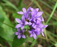 Bouquet des fleurs sauvages Photo libre de droits