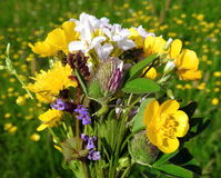 Bouquet des fleurs sauvages colorées images libres de droits