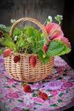 Bouquet des fraisiers communs dans un panier Image stock