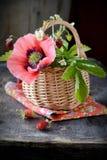 Bouquet des fraisiers communs dans un panier Photographie stock