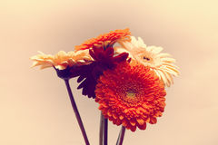 Bouquet des gerberas Image libre de droits