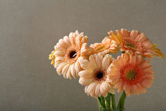 Bouquet des gerberas roses photographie stock libre de droits