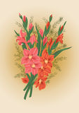 Bouquet des gladioluses roses et rouges Illustration de Vecteur