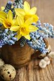 Bouquet des jonquilles et du muscari bleu (jacinthe de raisin) image libre de droits