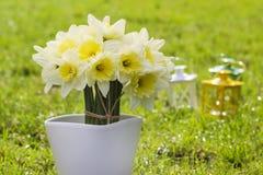 Bouquet des jonquilles sur l'herbe verte fraîche photos stock