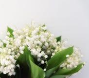 Bouquet des lis de ressort de la vallée Photographie stock libre de droits