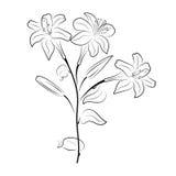 Bouquet des lis graphiques sur un fond blanc Photos stock