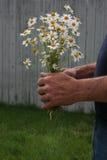 Bouquet des marguerites Image libre de droits