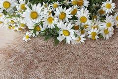 Bouquet des marguerites Photographie stock libre de droits