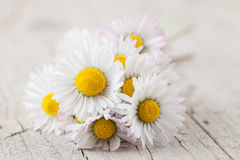 Bouquet des marguerites Image stock