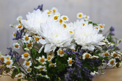 Bouquet des marguerites Photo libre de droits