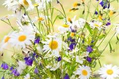Bouquet des marguerites blanches Photographie stock