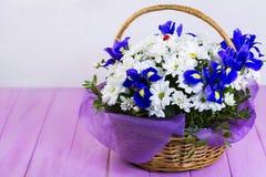 Bouquet des marguerites blanches et du coq bleu Images stock