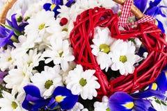 Bouquet des marguerites blanches et du coq bleu Photo stock