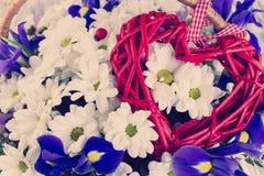 Bouquet des marguerites blanches et du coq bleu Photo libre de droits