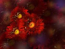 Bouquet des marguerites rouges sur le fond rouge foncé illustration stock