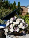Bouquet des marguerites sensibles dans un pot à la table Images libres de droits