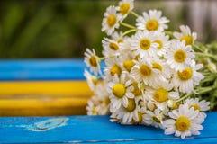 Bouquet des marguerites sur le banc Photographie stock