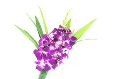 Bouquet des orchidées pourprées Image libre de droits