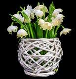 Bouquet des perce-neige, d'isolement Photos stock