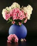 Bouquet des phloxes dans un vase Image libre de droits