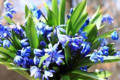 Bouquet des premières fleurs de ressort Images libres de droits