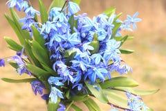 Bouquet des premières fleurs de ressort Photo libre de droits