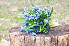 Bouquet des premières fleurs de ressort Image stock