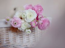 Bouquet des renoncules Photographie stock