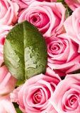 Bouquet des roses Photo stock