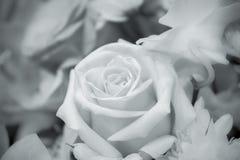Bouquet des roses aux nuances de noir et blanc Image libre de droits