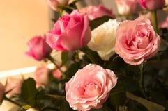 Bouquet des roses roses avec le fond neutre Images stock