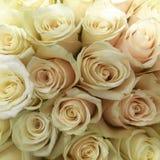 Bouquet des roses blanches Photographie stock libre de droits