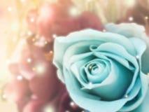 Bouquet des roses bleues avec la lumière de fusée Photo stock