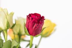 Bouquet des roses colorées Photo libre de droits