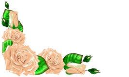 Bouquet des roses crèmes avec des feuilles et des bourgeons sur un backgroun blanc Image libre de droits