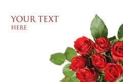Bouquet des roses d'isolement Image stock