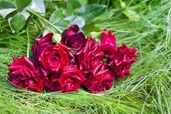 Bouquet des roses de scarlett sur l'herbe verte Photographie stock
