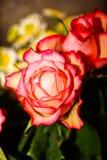 Bouquet des roses roses fonc?es image libre de droits