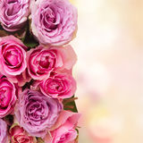 Bouquet des roses fraîches Photos libres de droits