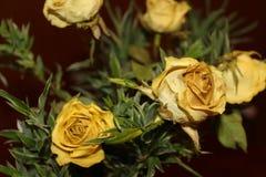 Bouquet des roses jaunes sèches photo stock