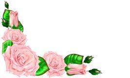 Bouquet des roses roses avec des bourgeons et des feuilles sur un fond blanc Image stock